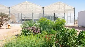 seawater to grow food in the desert