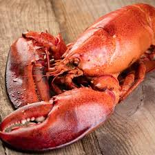 mail order steamed maine lobsters