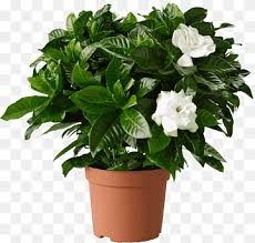 potted plant flower