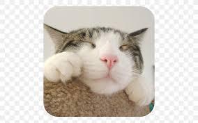 cats crash arena turbo stars felidae