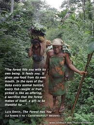rainforest and pygmies photo gallery of the book the forest has