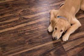 cali vinyl pet friendly flooring