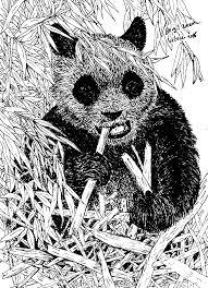 Tekening Van Een Reuzen Pandabeer Getekend Door Brigit Weeda