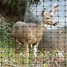 Metal Deer Fencing Orphans Education