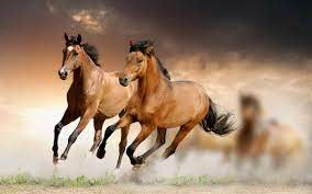 running horse wallpapers top free