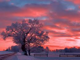 sunset sky snow tree color nature hd