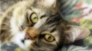 5 mon cat eye problems healthy paws