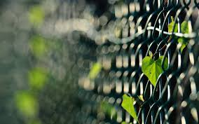 Fences Leaves Macro Depth Of Field Chain Link Fence Wallpapers Hd Desktop And Mobile Backgrounds