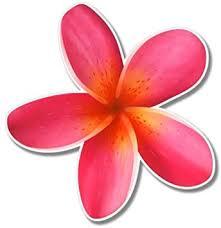 Amazon Com Ak Wall Art Plumeria Hawaiian Flower Tropical Vinyl Sticker Car Window Bumper Laptop Select Size Home Kitchen