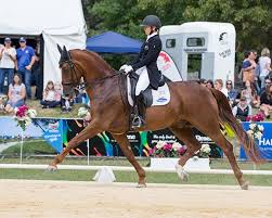CDI-W Pacific wins for Don Amour | Breeding News for Sport Horses