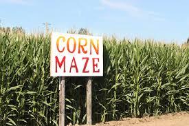 Corn Maze in Lancaster PA ...