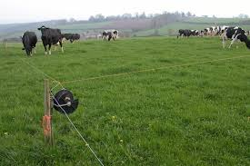 How To Install An Electric Fence For Cattle Stuff4petz