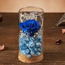 preserved rose glass apollobox