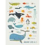 Sea Life Wall Decal Wayfair