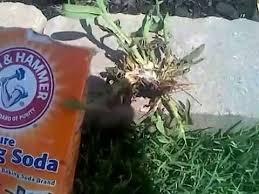 baking soda kills crabgrass instantly