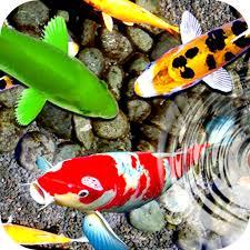 latest koi fish live wallpaper