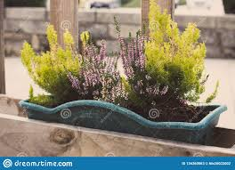 Green Grass And Blooming Flowers In Flower Pots On Fence Flower Containers On Wooden Fence In Perspective Terrace Design Stock Image Image Of Spring Perspective 134360963
