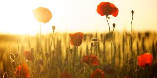 Aromaterapie a pět elementů – Pozdní léto: Slezina, slinivka a ...