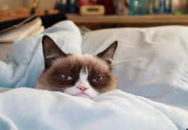 grumpy cat cats s background