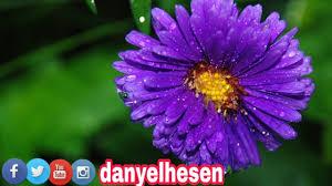 صور طبيعة و باقة ورد Weneyen Xwezayi U Gulan 11 4k Youtube