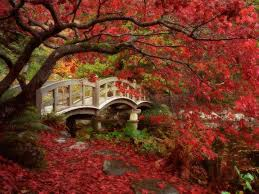 garden art of japan profound