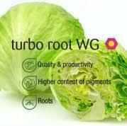 nutritional value of iceberg lettuce