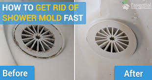 how to remove mold from the shower