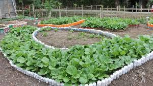 backyard gardening gaining ground