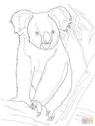 Koalabeer In Een Boom Kleurplaat Gratis Kleurplaten Printen