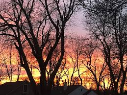 A fiery sunset among trees that are... - NewsCenter1 Media Group ...