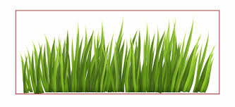 Fence Clipart Plant Grass Fence Plant Grass Transparent Free For Download On Webstockreview 2020