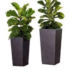 plant pots planters