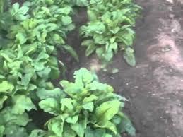 vegetable garden in ontario canada