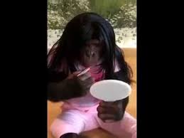 monkey makeup funny video you