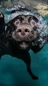 4k wallpaper puppy black underwater