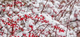 Winter (iarna)  Images?q=tbn%3AANd9GcQGPrGhIEXoE40ea2IXV9BJTXvq38BdZeX4JFbYzDBbLQkTCXJC