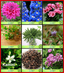 plant seeds bo flower seeds tree