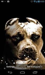 pitbull dog live wallpaper android