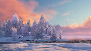 peaceful winter scenery with snowy fir
