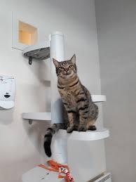 Cat Containment System Australia