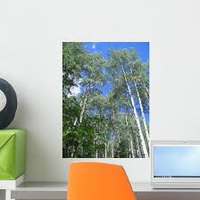 Aspen Trees Wall Decal Wallmonkeys Com
