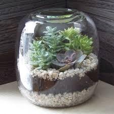 succulent terrarium tutorial
