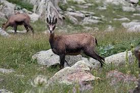 Parc national du Mercantour — Wikipédia