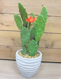 fake green bunny cactus relief planter