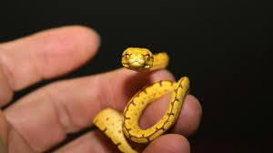 how to feed a baby snake pet snakes