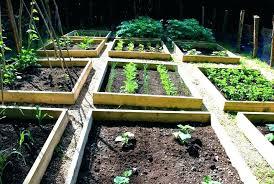 veggie garden layout planner outdoor