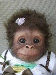 cute funny monkey funny monkey pictures
