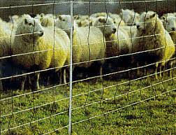 Pg 2 Portable Electric Net Fast Fence Sheep Goats Poultry Dogs Fencing Nets
