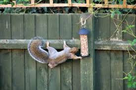 squirrel repellent archives effective