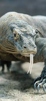 komodo dragon lizard 3840x2160 uhd 4k